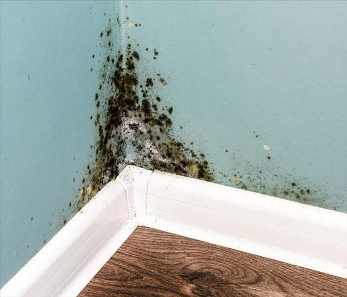 image of residential mold present in the corner of a room