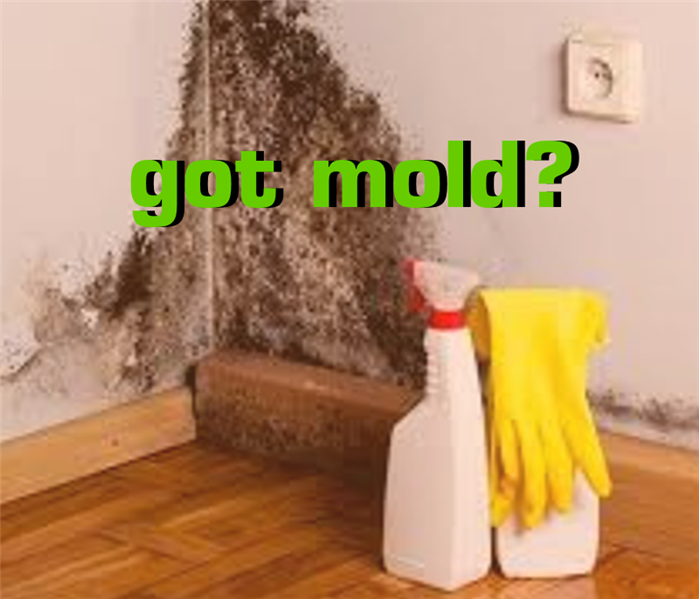 "text ""got mold?"" and mold picture in the background"